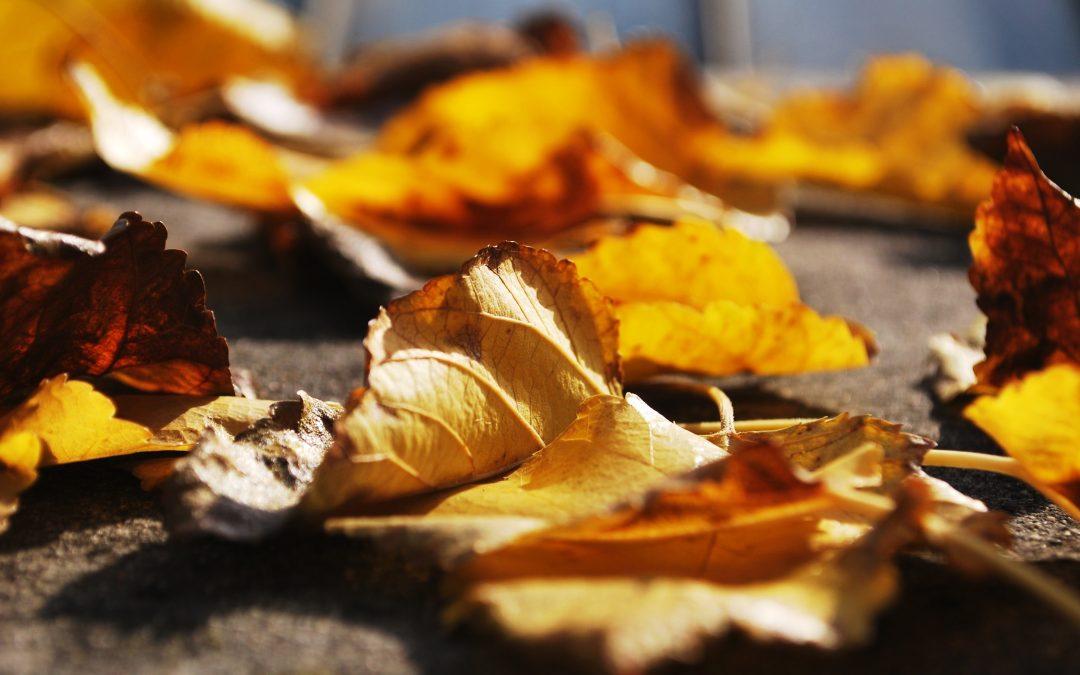 Höstens städdag!
